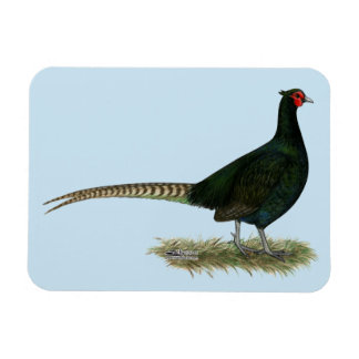 Pheasant Black Rooster Magnets