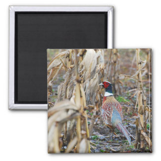 Pheasant Magnet