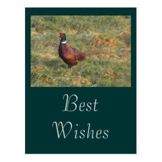 Pheasant Postcard