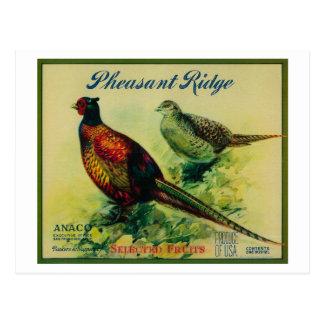 Pheasant Ridge Apple Crate Label Post Card