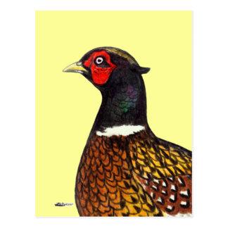 Pheasant:  Ringneck Head Postcard