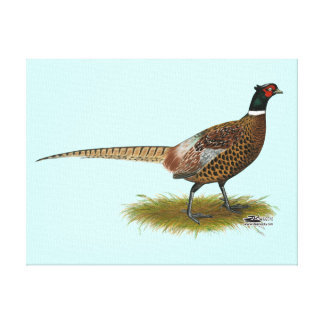 Pheasant Rooster Canvas Print