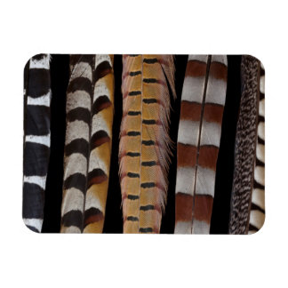 Pheasant tail feathers magnet