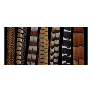Pheasant tail feathers poster