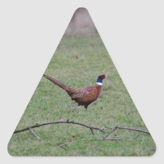 Pheasant Triangle Sticker