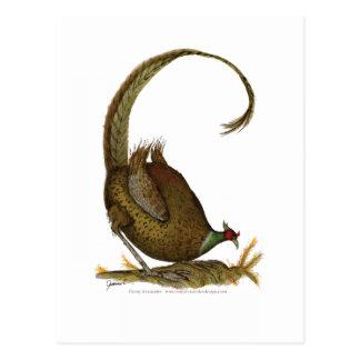 pheasant wild bird, tony fernandes postcard
