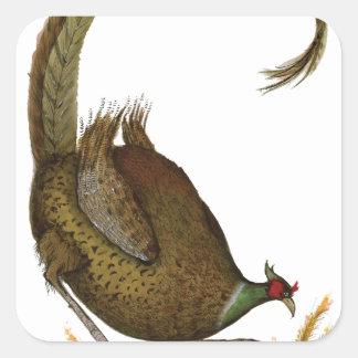 pheasant wild bird, tony fernandes square sticker
