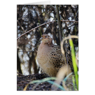 Pheasant - Wild Pheasant In The Trees Photography Greeting Card