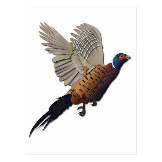 Pheasant without Text Postcard