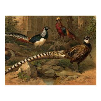 Pheasants postcard
