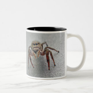 Phiddipus Jumping Spider Series Matching Items Two-Tone Coffee Mug