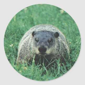 Phil Groundhog Etiquetas Redondas