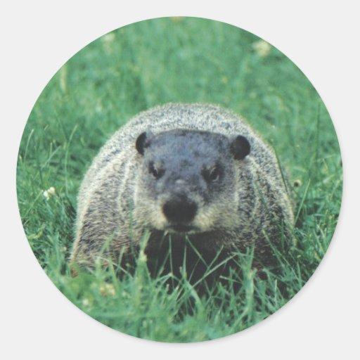 Phil Groundhog Pegatina Redonda