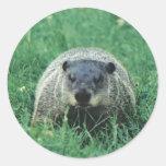 Phil Groundhog Stickers