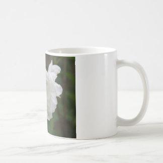 Philadelphus  (Mock Orange) Flower Mug