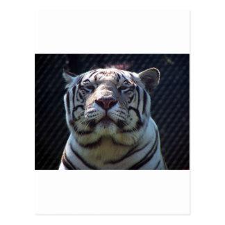 Philadephia Zoo Postcard