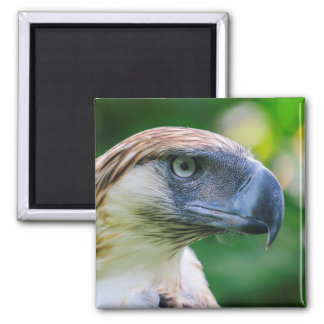 Philippine Eagle Head Detail Magnet