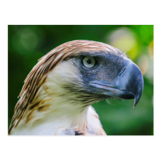Philippine Eagle Head Detail Postcard
