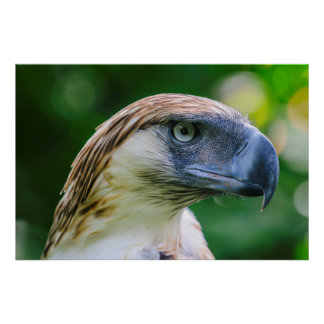 Philippine Eagle Head Detail Poster