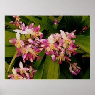 Philippine Ground Orchids Poster