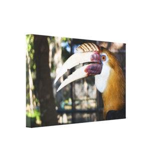 Philippine Hornbill Canvas Print