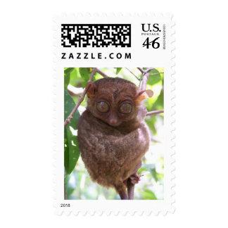 Philippine Tarsier Postage Stamp