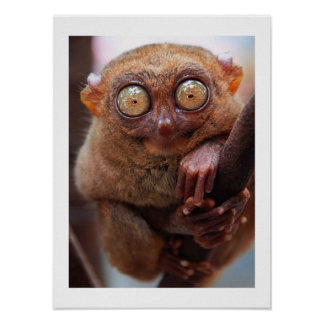 Philippine Tarsier - Value Poster Paper (Matte)