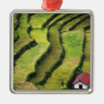Philippines, Batad, elevated view of rice Ornaments