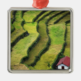 Philippines, Batad, elevated view of rice Square Metal Christmas Ornament