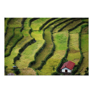 Philippines, Batad, elevated view of rice Poster