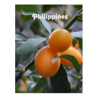 Philippines Kumquats Postcard