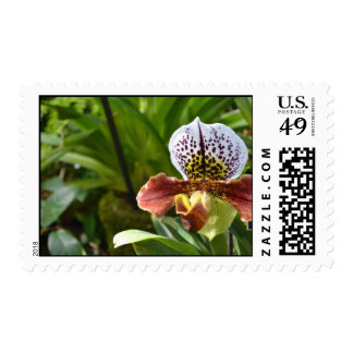 Phipps 8 postage stamps