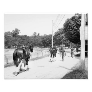 Phipps Thoroughbreds at Saratoga Photo Print