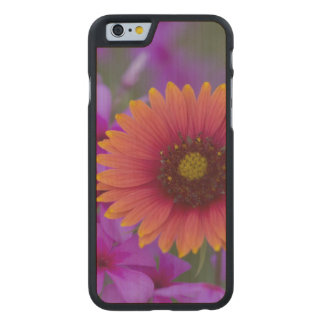 Phlox and Indian Blanket near Devine Texas Carved® Maple iPhone 6 Slim Case