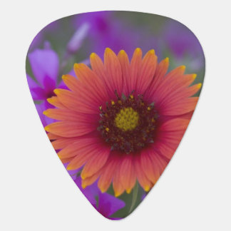 Phlox and Indian Blanket near Devine Texas Guitar Pick