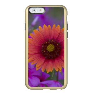 Phlox and Indian Blanket near Devine Texas Incipio Feather® Shine iPhone 6 Case