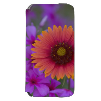 Phlox and Indian Blanket near Devine Texas iPhone 6/6s Wallet Case
