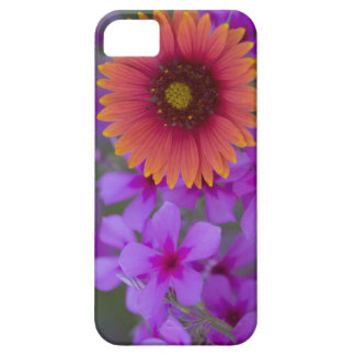 Phlox and Indian Blanket near Devine Texas iPhone SE/5/5s Case