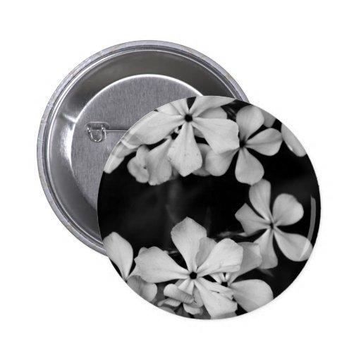 Phlox blanco y negro pin