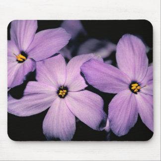 Phlox del arrastramiento flores púrpuras Mousepa Tapetes De Raton