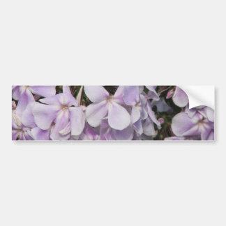 Phlox Flowers Bumper Sticker