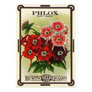 phlox mezclado tarjetas postales