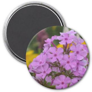 "Phlox púrpura del jardín 3"" imán redondo"