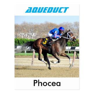 Phocea con el Jr. de Irad Ortiz Postales