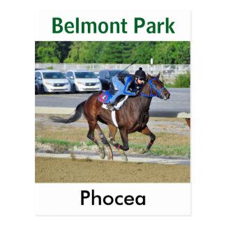 Phocea with Francisco Arrieta Postcard