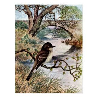 Phoebe and Stone Bridge Over Creek Post Card