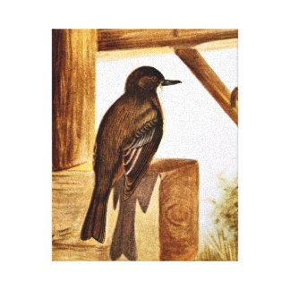 Phoebe Bird Illustration Canvas Prints