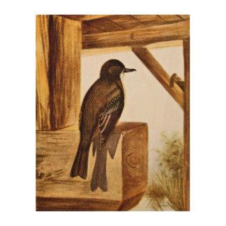 Phoebe Bird Illustration Wood Prints