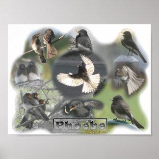 Phoebe Birds Photo Collage Poster