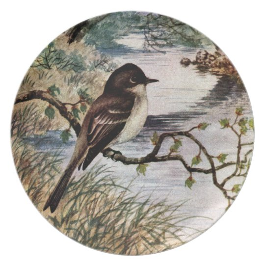 Phoebe on Branch by Creek Plate